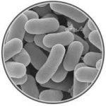 アトピーに良く効く栄養素 乳酸菌