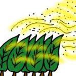 アトピーの人の花粉対策 春先のアトピー悪化は花粉を疑え